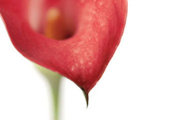 FabCom's close-up image of red flower that symbolizes zenful simplicity and calm.